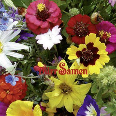 Σπόροι λουλουδιών DÜRR SAMEN