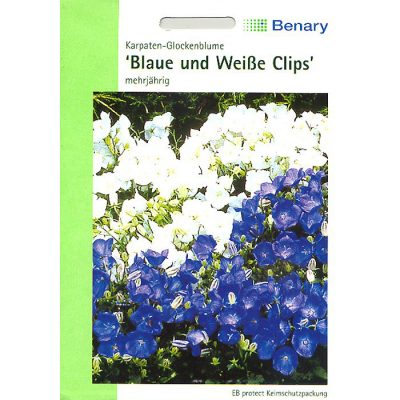 "H1170 - Campanula carpatica ""Blue and White Clips"""