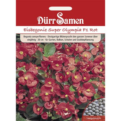 "DS1105 - Begonia semperflorens ""Super Olympia F1 Red"""
