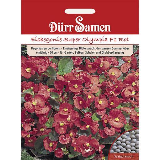 "DS1105 - Μπιγκόνια αειανθής κόκκινη - Begonia semperflorens ""Super Olympia F1 Red"""