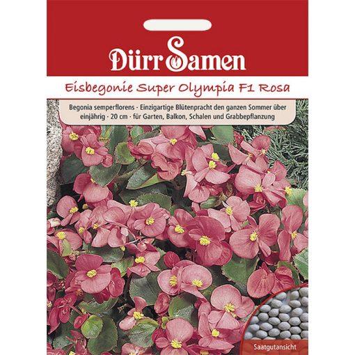 """DS1107 - Μπιγκόνια αειανθής ροζ - Begonia semperflorens """"Super Olympia F1 Pink"""""""
