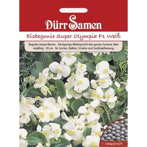"DS1108 - Μπιγκόνια αειανθής λευκή - Begonia semperflorens ""Super Olympia F1 White"""