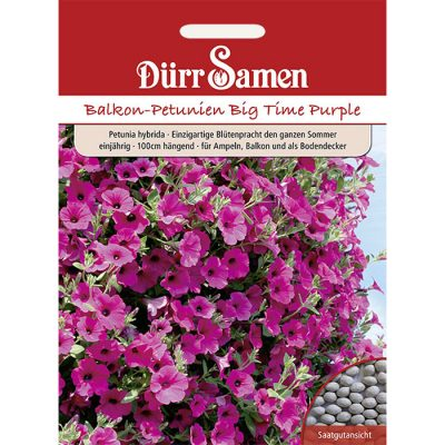 "DS1954 – Petunia hybridica ""Big Time Purple"""