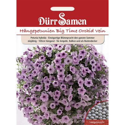 "DS1983 – Petunia hybridica ""Big Time Orchid Vein"""