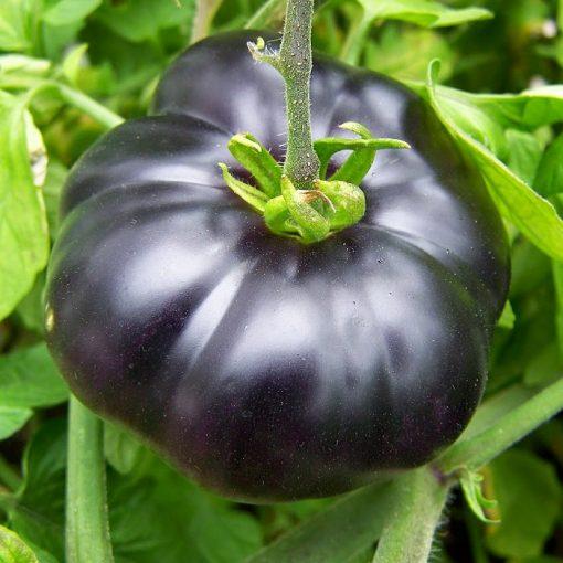 MT 5136 Black Beauty – Ντομάτα – Lycopersicon esculentum