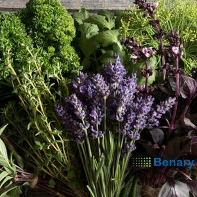 Σπόροι βοτάνων και αρωματικών φυτών BENARY