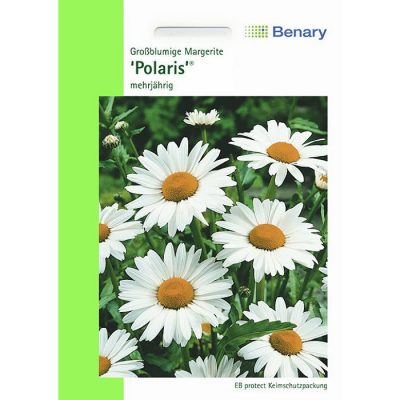 R0490 - Μαργαρίτα λευκή - Leucanthemum x superbum