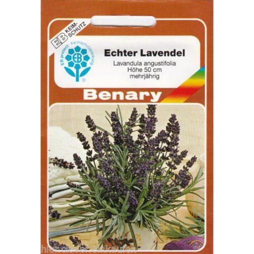 Z8440 - Λεβάντα - Lavandula angustifolia