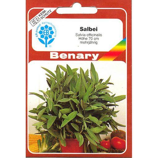 Z8810 - Φασκόμηλο - Salvia officinalis
