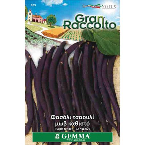 """FAG 823 - Φασόλι ταουλί μωβ καθιστό - Phaseolus vulgaris """"Purple Teepee"""""""
