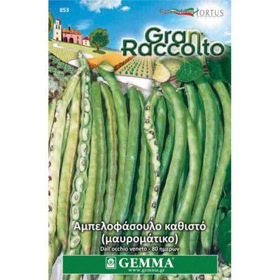 """FAG 853 - Vigna unguiculata """"Dall' Occhio Veneto"""""""