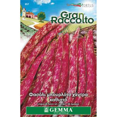 "FAG 857 - Φασόλι μπουρλότο χάντρα καθιστό - Phaseolus vulgaris ""Borlotto Lingua di Fuoco"""