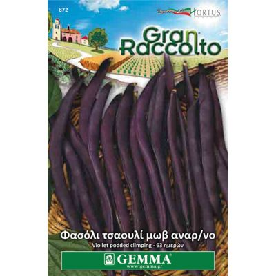"FAG 872 - Phaseolus vulgaris ""Purple Podded Climbing"""