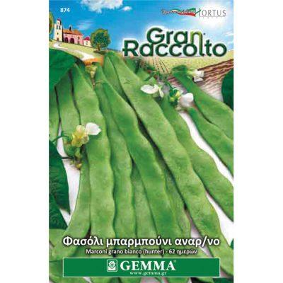 "FAG 874 - Φασόλι μπαρμπούνι αναρριχώμενο - Phaseolus vulgaris ""Marconi Grano Bianco"""