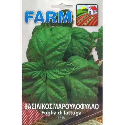 FARM 506 - Ocimum basilicum