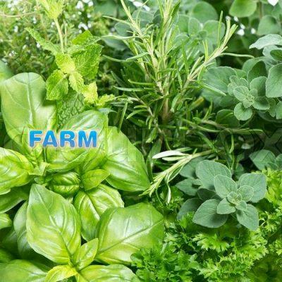 Σπόροι βοτάνων και αρωματικών φυτών FARM