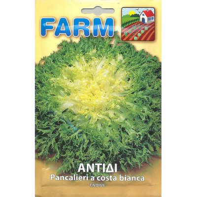 FARM 112 - ΑΝΤΙΔΙ ΚΑΤΣΑΡΟ – Cichorium endivia var. crispum