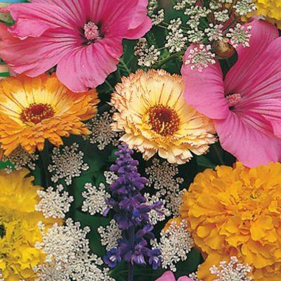 Flower Seeds FIOREVIVO