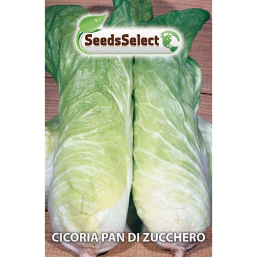 CIC12 - Cichorium intybus