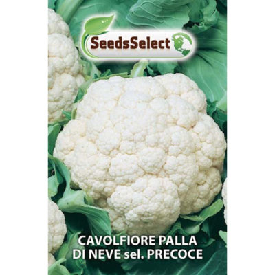 CVF01 - ΚΟΥΝΟΥΠΙΔΙ ΠΡΩΙΜΟ – Brassica oleracea var. botrytis