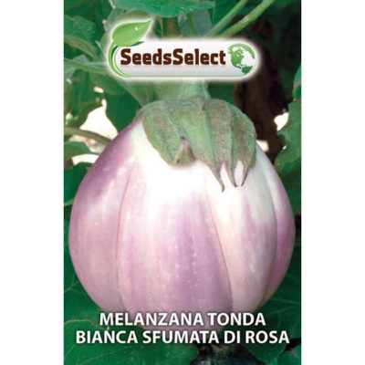 MLZ05 - ΜΕΛΙΤΖΑΝΑ ΦΛΑΣΚΑ ΡΟΖ-ΛΕΥΚΗ – Solanum melongena