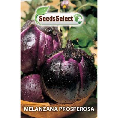 MLZ07 - ΜΕΛΙΤΖΑΝΑ ΣΦΑΙΡΙΚΗ – Solanum melongena