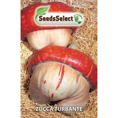ZC10 - ΚΟΛΟΚΥΘΑ ΤΟΥΛΠΑΝΙ – Cucurbita maxima