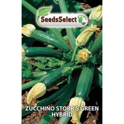 ZUC01 - ΚΟΛΟΚΥΘΑΚΙ ΠΡΑΣΙΝΟ – Cucurbita pepo