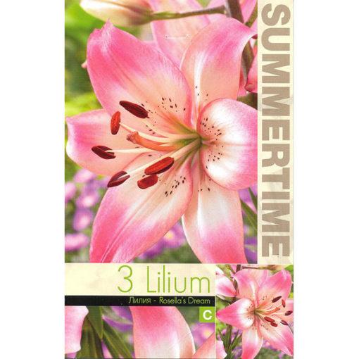 9271 Lilium Rosella's Dream