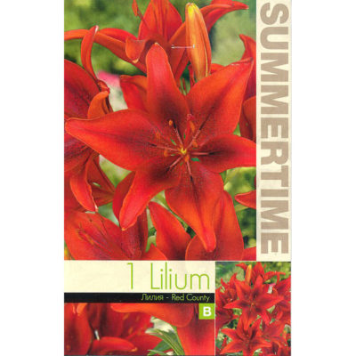 9282 Lilium Red County