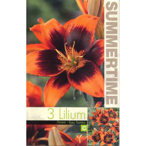9411 Lilium Easy Samba