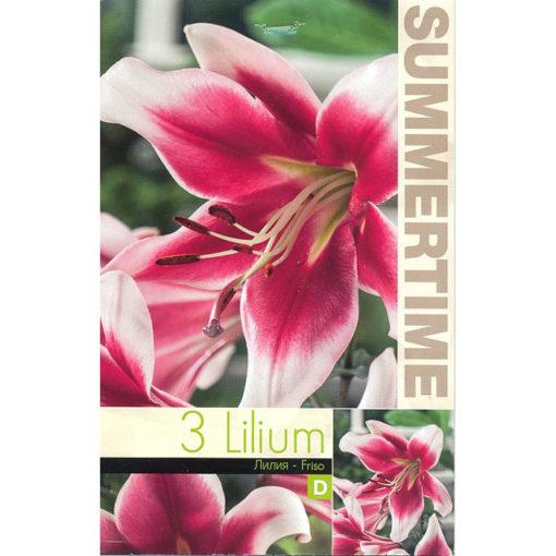 9413 Lilium Friso