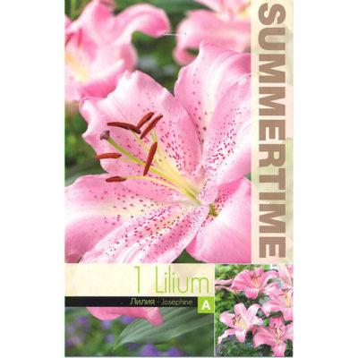 9446 Lilium Josephine