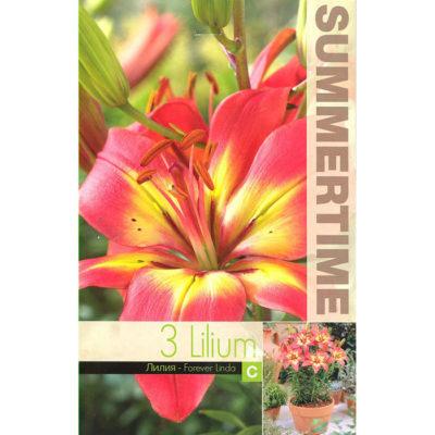 9451 Lilium Forever Linda