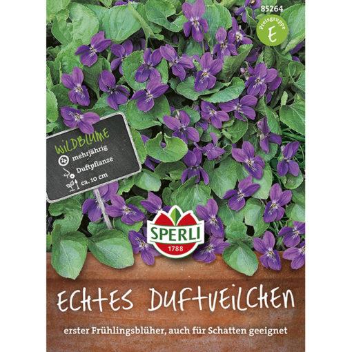 85264 – Viola odorata