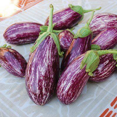 ΜΤ 7010 Listada de Gandia - Μελιτζάνα – Solanum melongena