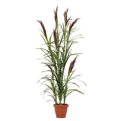 Τεχνητό φυτό – Καλαμιά 312600