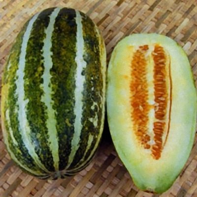 DF 6026 Thai Best (Cucumis melo)