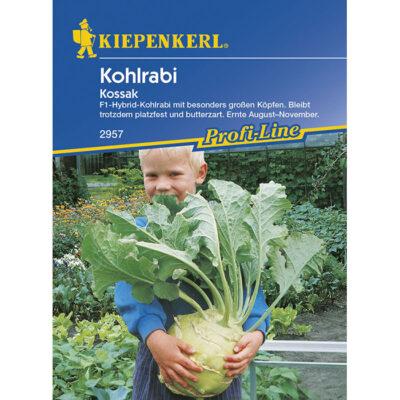 "2957 – Brassica oleracea ""Kossak F1"""