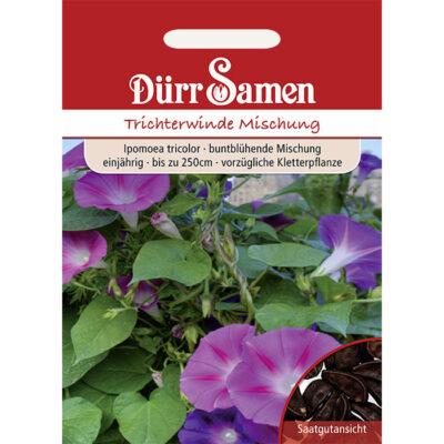 DS0639 - Ιπόμεα ροζ-μωβ – Ipomoea tricolor