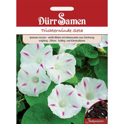 DS0990 - Ιπόμεα λευκή ροζ - Ipomoea tricolor