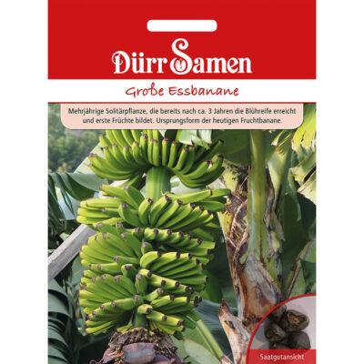 DS4461 - Μπανάνα μεγάλη - Musa x paradisiaca