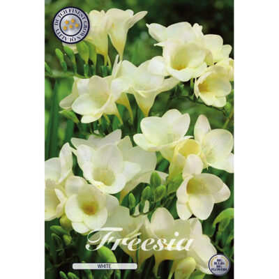 01780 Freesia White