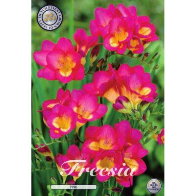 01785 Freesia Pink