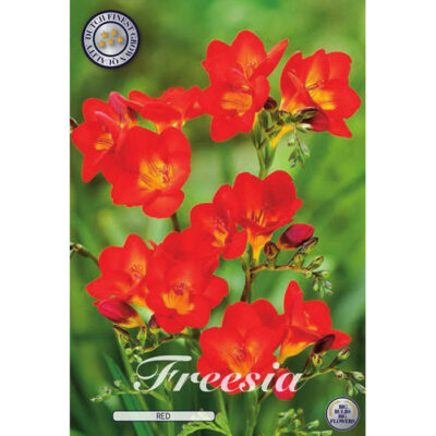 01790 Freesia Red