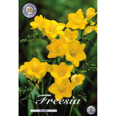 01795 Freesia Yellow