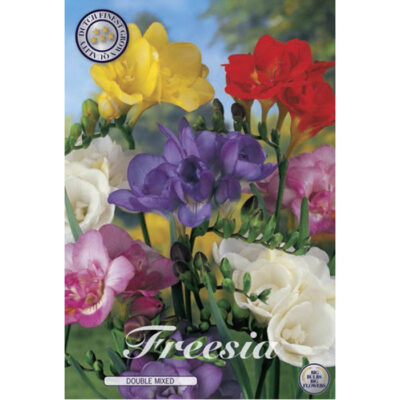 01800 Freesia Double Mixed