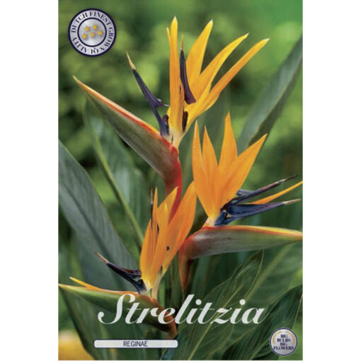 02100 Strelitzia – Στρελίτζια reginae