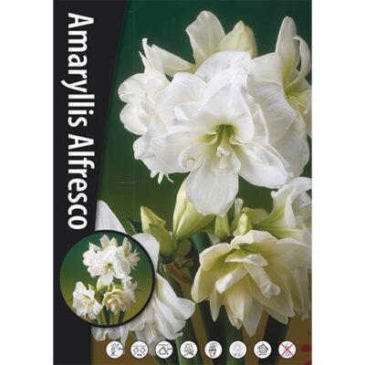 15160 Amaryllis – Αμαρυλλίς Alfresco