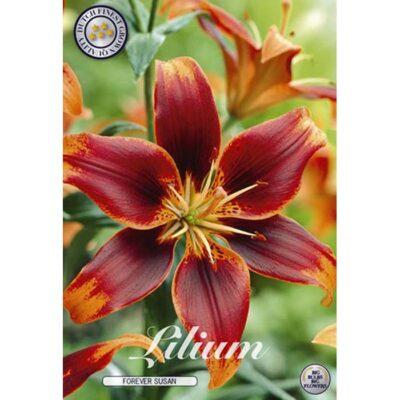 40261 Lilium – Λίλιουμ Forever Susan